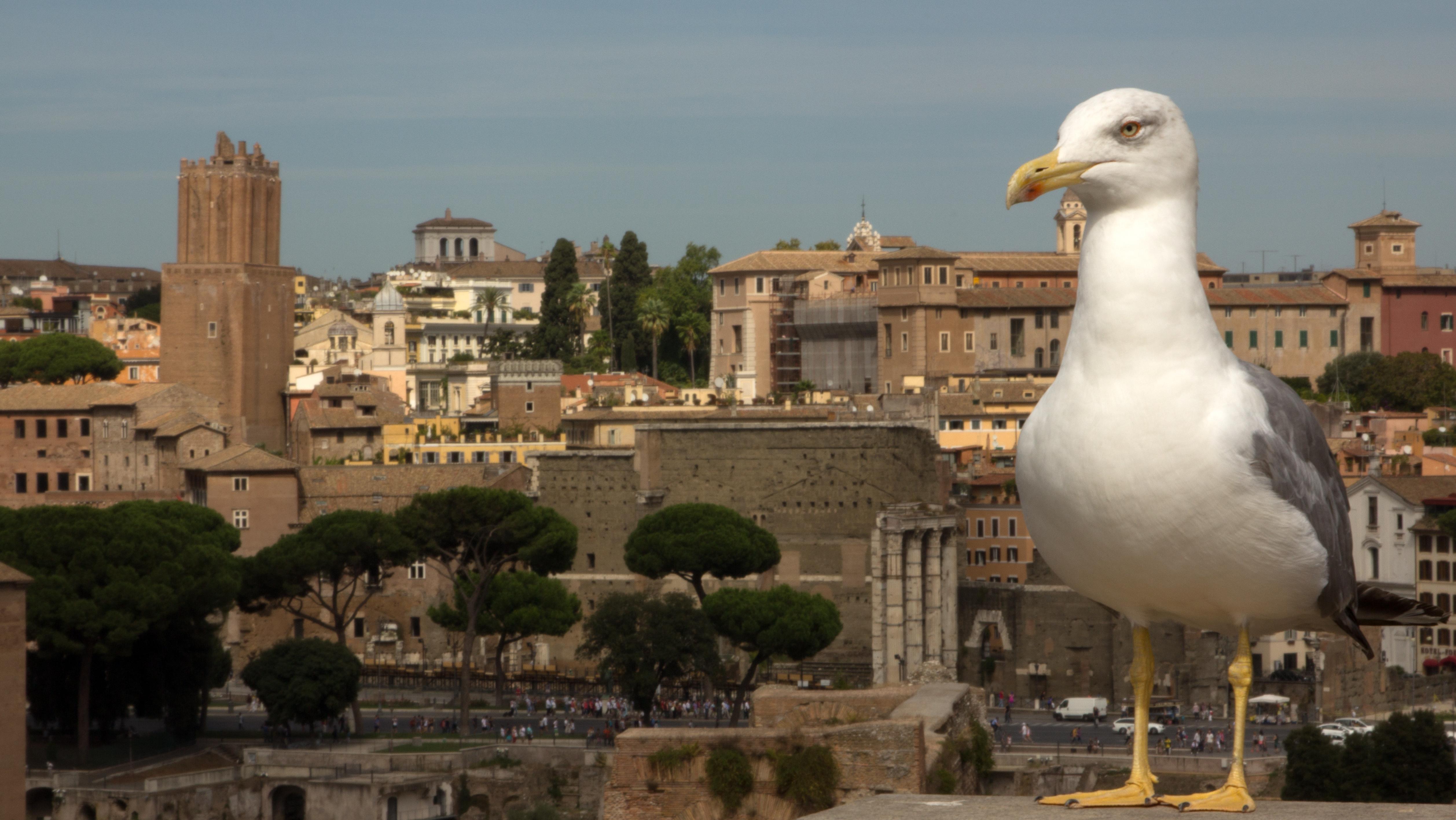 Rome uitzicht